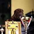 ocena Excellent , Junior Winner ,Best Junior of Breed , Best of Breed lokata 1, sędzia Mrowiec Walde